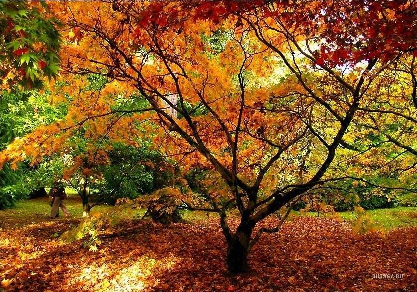 Прекрасная золотая осень – это